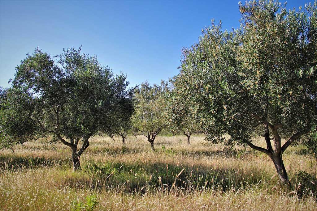 Agriturismo olivi Salento