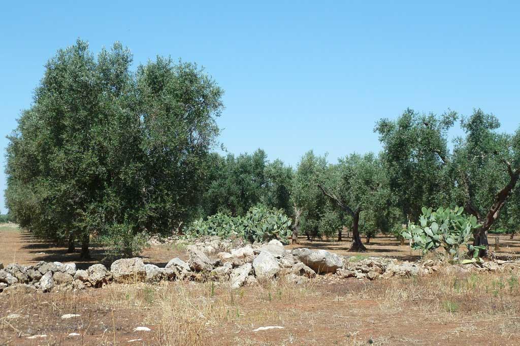 Agriturismo ulivi salento